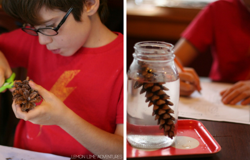 Send the kids outside to collect pine cones, and then watch them discover how they open up!