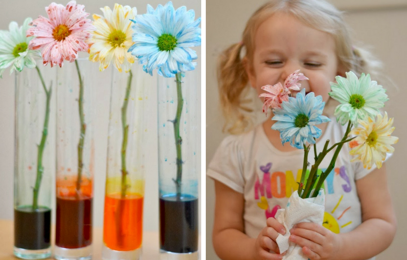 Show the little ones how flowers absorb nutrients through their stems. They won't believe the petals changing colors right before their eyes!