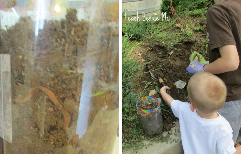 Watch the worms wiggle, dig tunnels, and explore in a giant dirt tower.